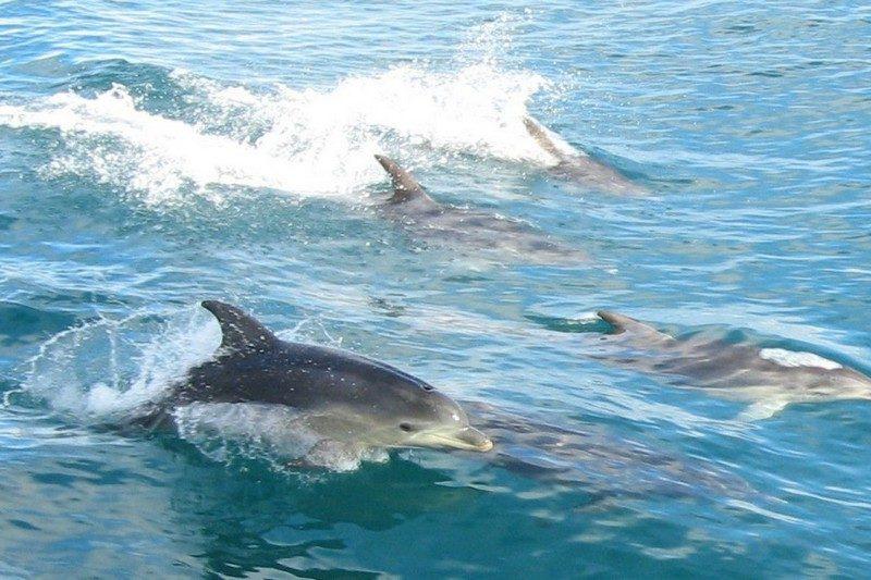 Дельфины в Черном море